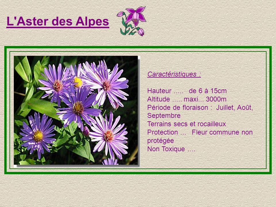 L Aster des Alpes Caractéristiques : Hauteur ..... de 6 à 15cm
