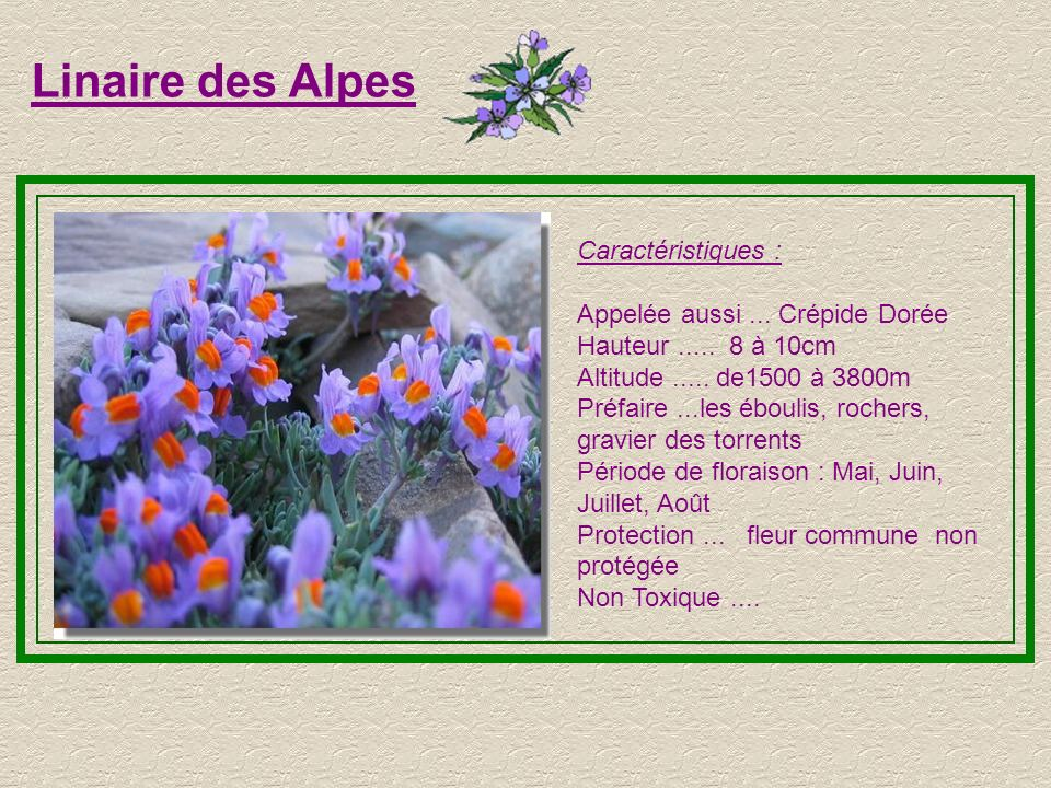 Linaire des Alpes Caractéristiques : Appelée aussi ... Crépide Dorée