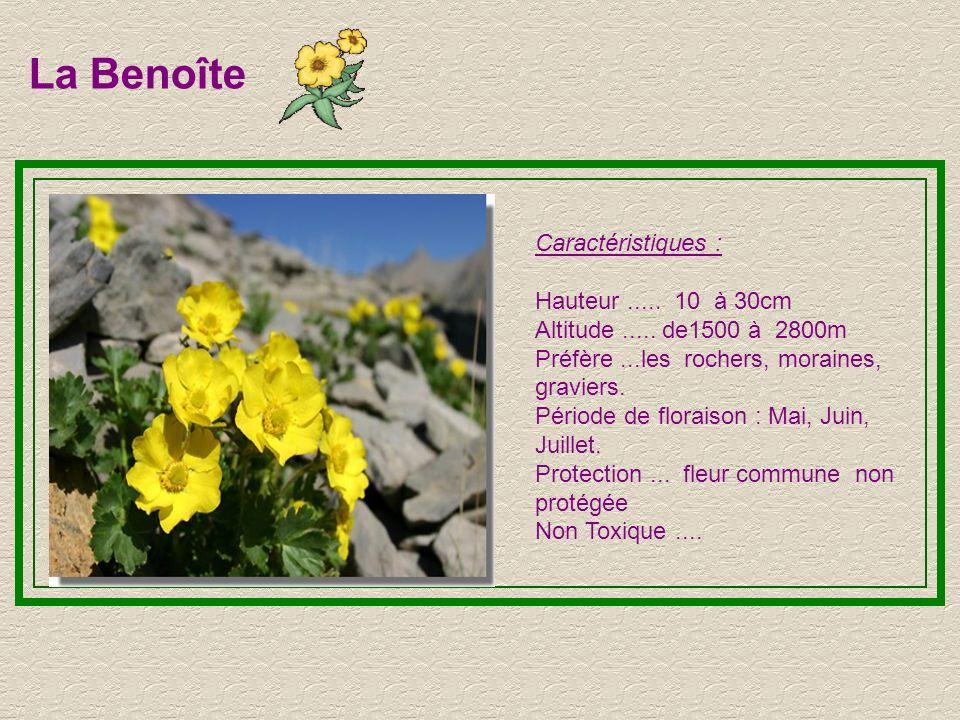La Benoîte Caractéristiques : Hauteur ..... 10 à 30cm