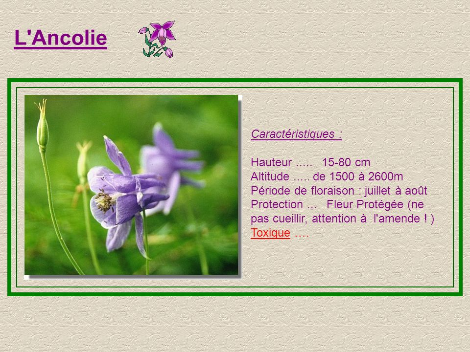 L Ancolie Caractéristiques : Hauteur ..... 15-80 cm