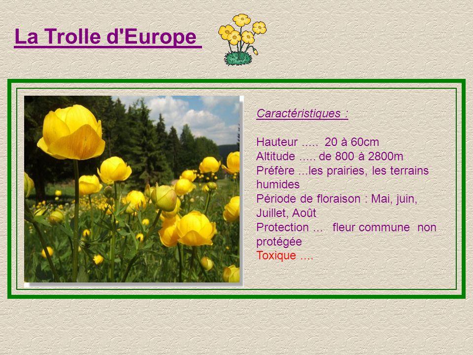 La Trolle d Europe Caractéristiques : Hauteur ..... 20 à 60cm