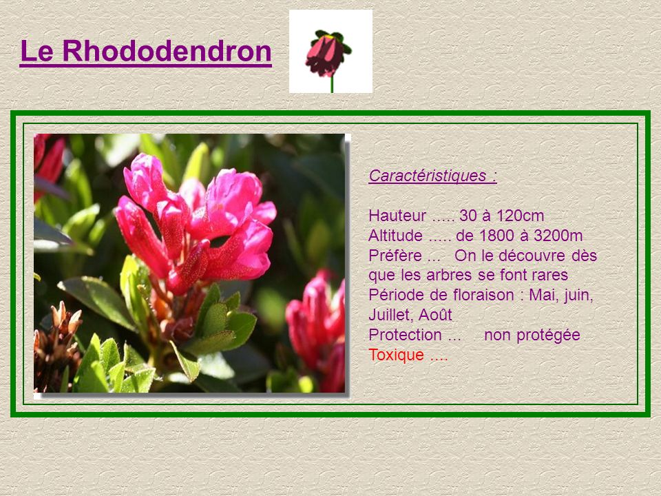 Le Rhododendron Caractéristiques : Hauteur ..... 30 à 120cm