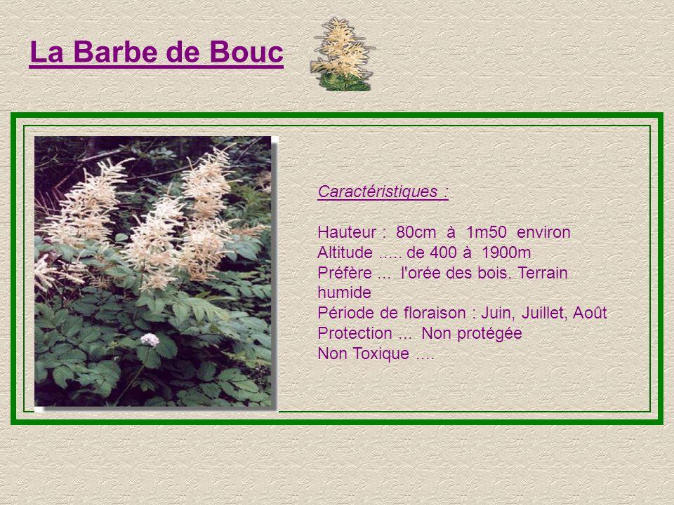 La Barbe de Bouc Caractéristiques : Hauteur : 80cm à 1m50 environ. Altitude ..... de 400 à 1900m