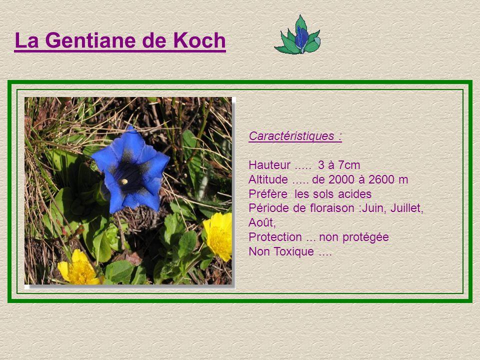 La Gentiane de Koch Caractéristiques : Hauteur ..... 3 à 7cm