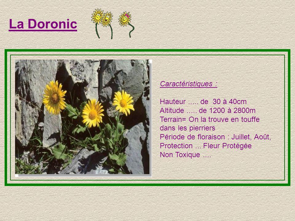 La Doronic Caractéristiques : Hauteur ..... de 30 à 40cm