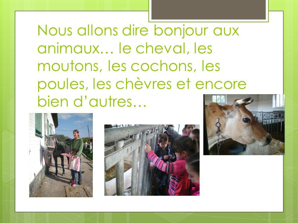Nous allons dire bonjour aux animaux… le cheval, les moutons, les cochons, les poules, les chèvres et encore bien d'autres…