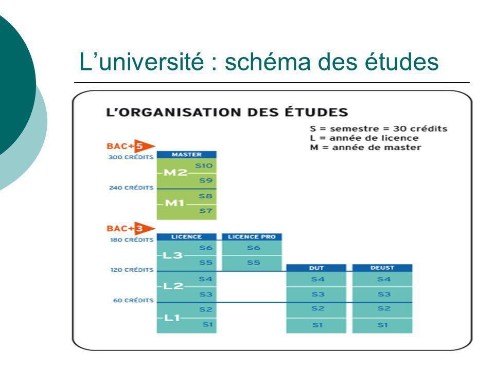L'université : schéma des études