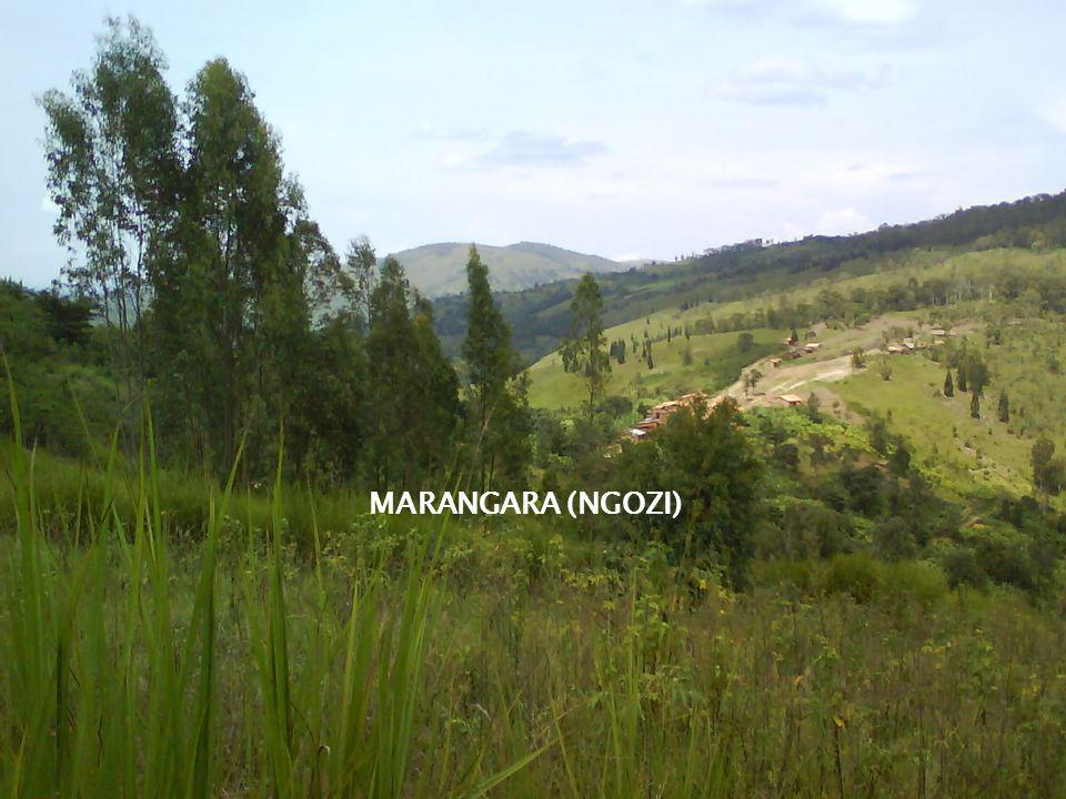 MARANGARA (NGOZI)
