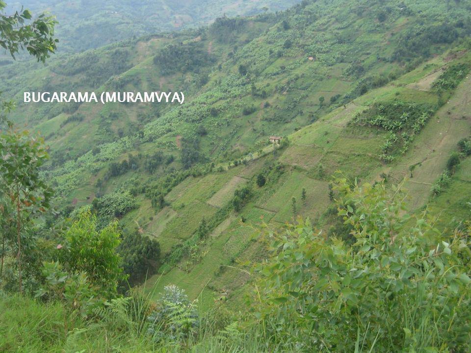 BUGARAMA (MURAMVYA)