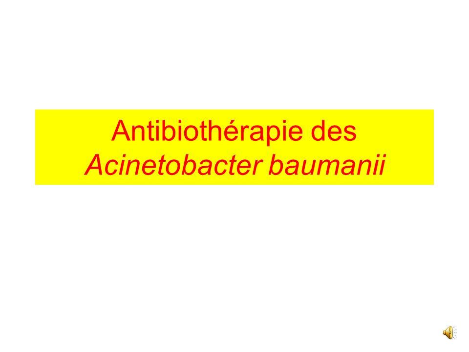 Antibiothérapie des Acinetobacter baumanii