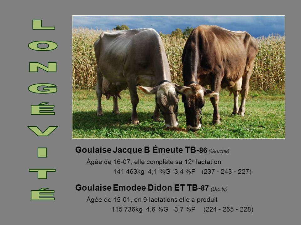 LONGÉVITÉ Goulaise Jacque B Émeute TB-86 (Gauche) Âgée de 16-07, elle complète sa 12e lactation. 141 463kg 4,1 %G 3,4 %P (237 - 243 - 227)