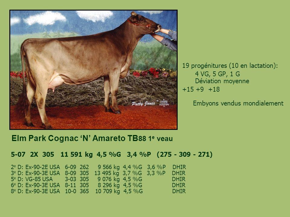 Elm Park Cognac 'N' Amareto TB88 1e veau