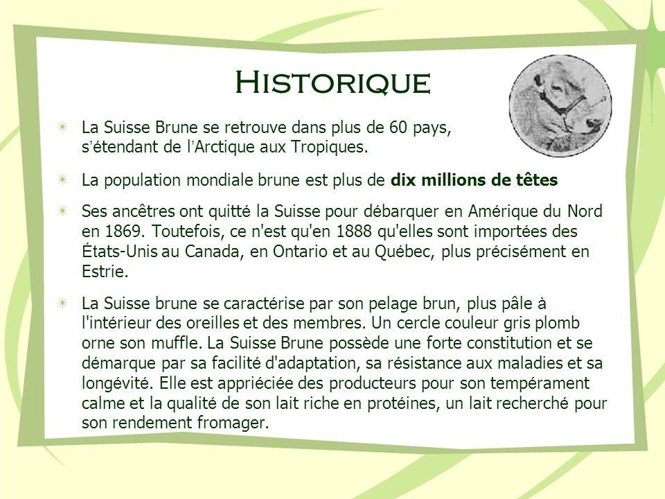 Historique La Suisse Brune se retrouve dans plus de 60 pays, s'étendant de l'Arctique aux Tropiques.