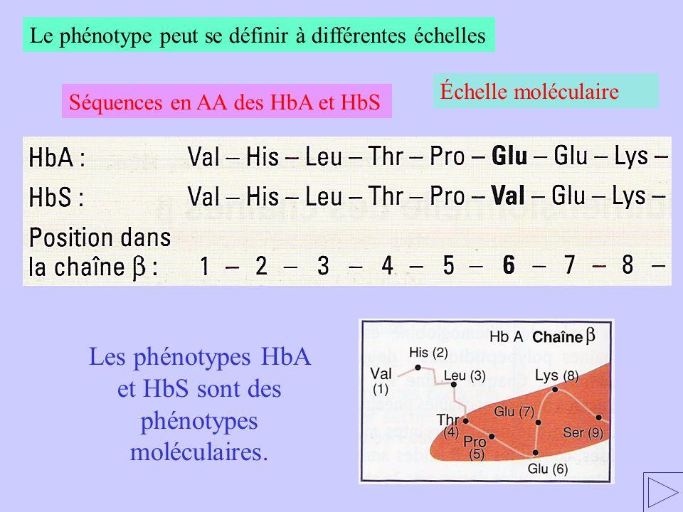Les phénotypes HbA et HbS sont des phénotypes moléculaires.