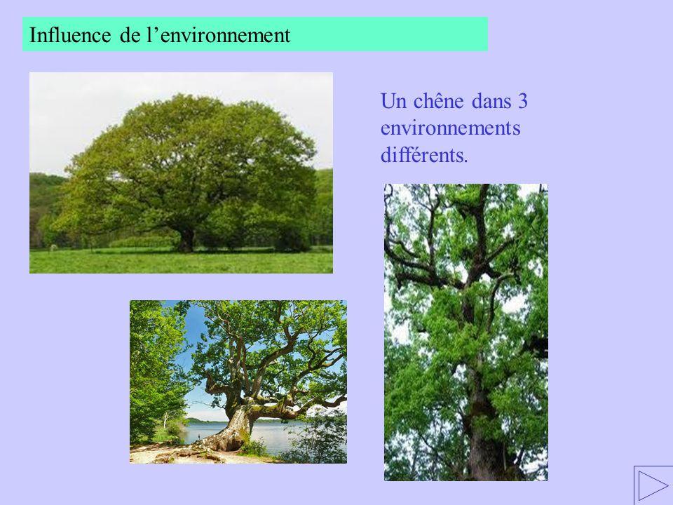Influence de l'environnement