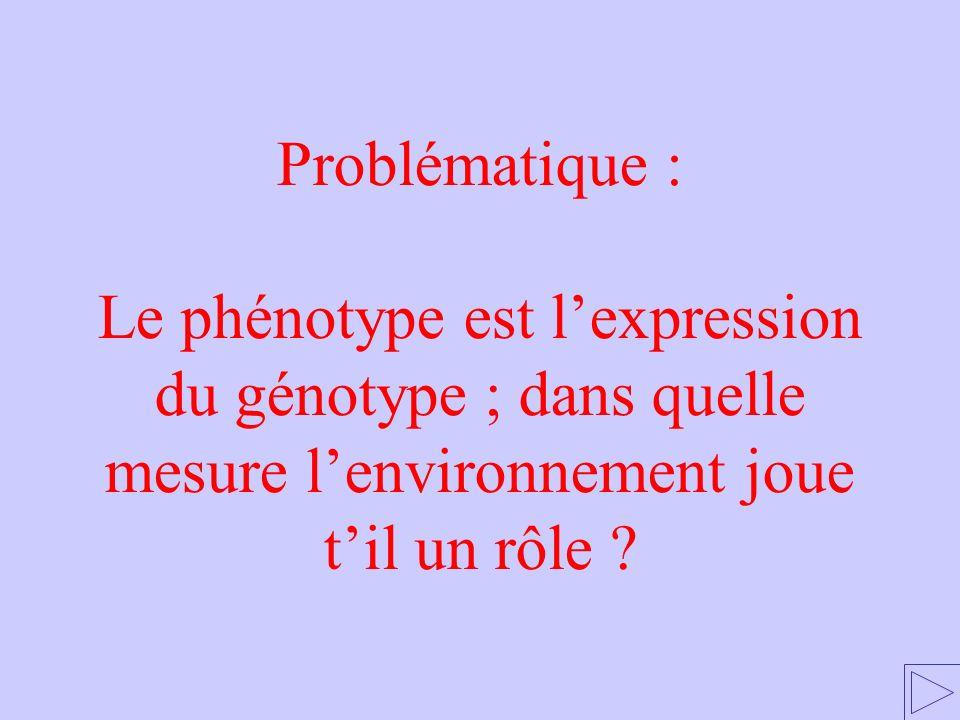 Problématique : Le phénotype est l'expression du génotype ; dans quelle mesure l'environnement joue t'il un rôle
