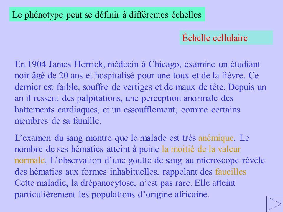 Le phénotype peut se définir à différentes échelles