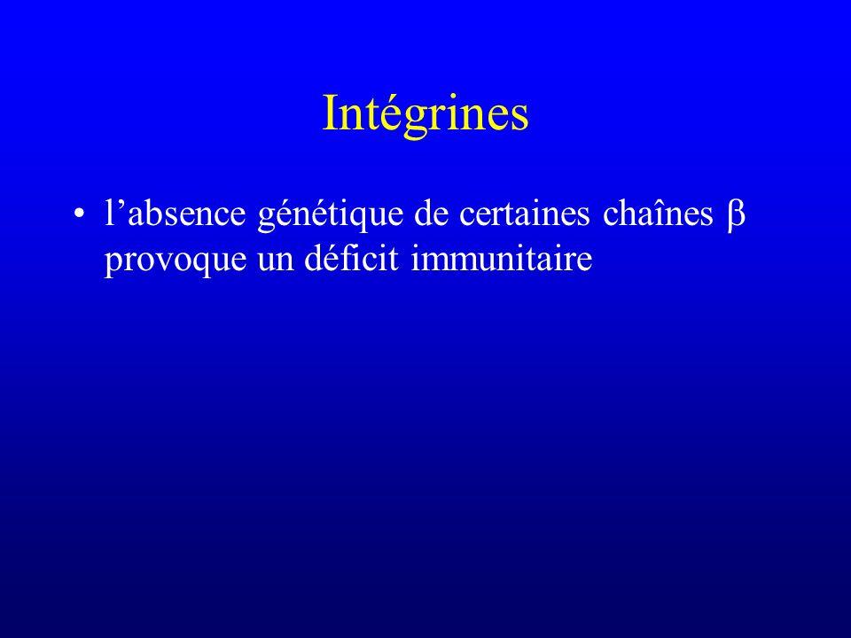 Intégrines l'absence génétique de certaines chaînes b provoque un déficit immunitaire