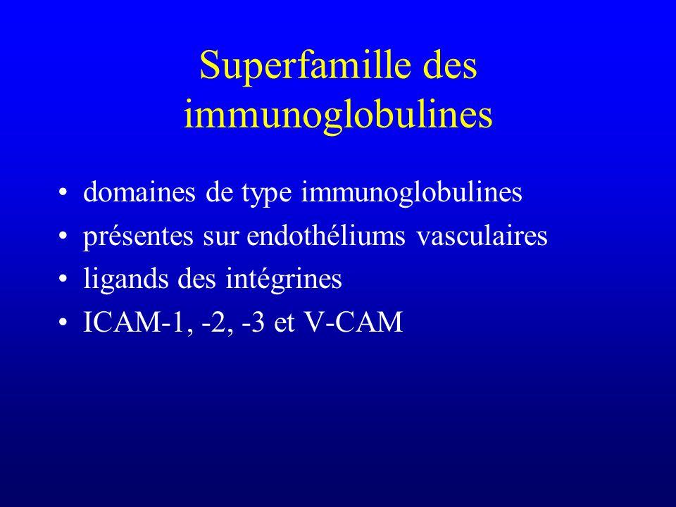 Superfamille des immunoglobulines