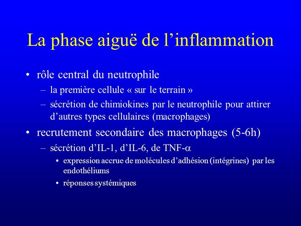 La phase aiguë de l'inflammation