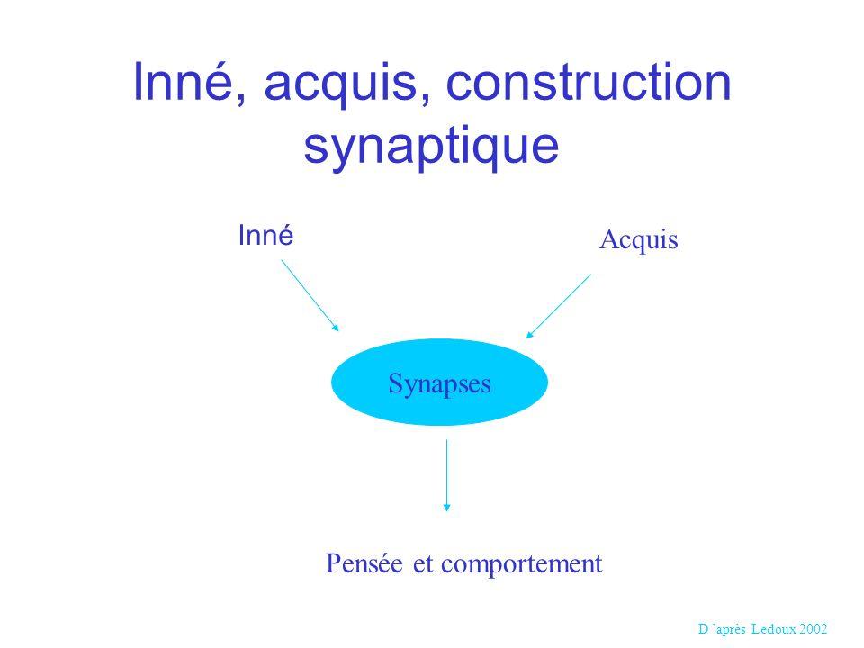 Inné, acquis, construction synaptique