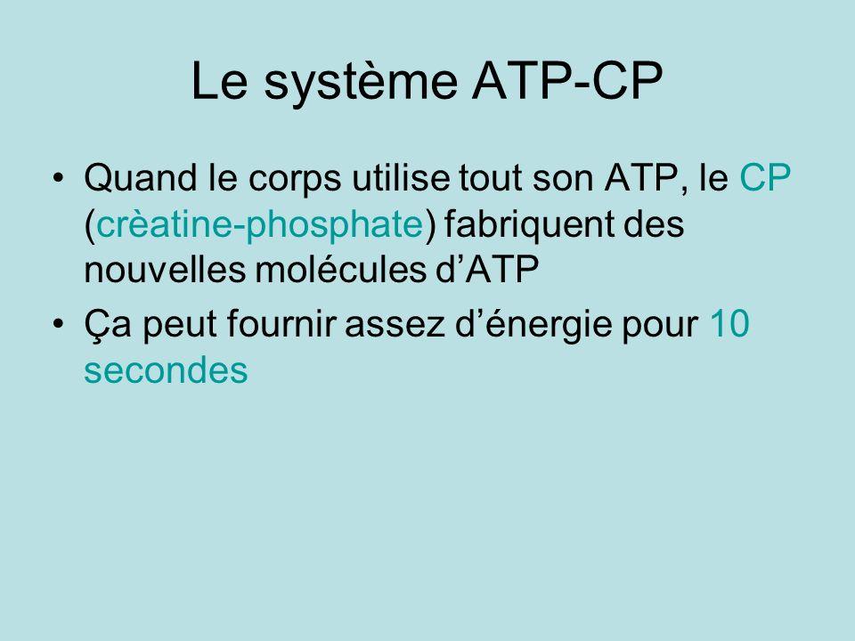 Le système ATP-CP Quand le corps utilise tout son ATP, le CP (crèatine-phosphate) fabriquent des nouvelles molécules d'ATP.