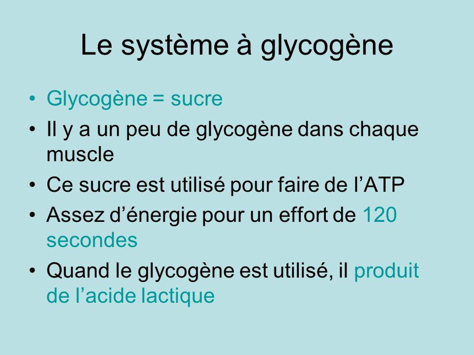 Le système à glycogène Glycogène = sucre