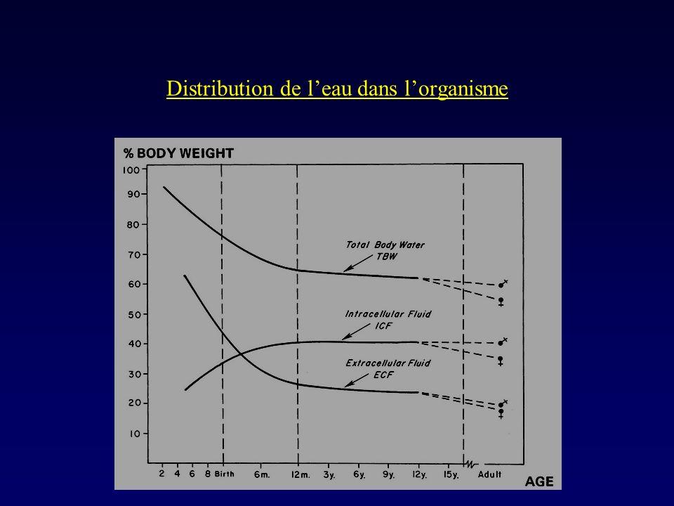 Distribution de l'eau dans l'organisme