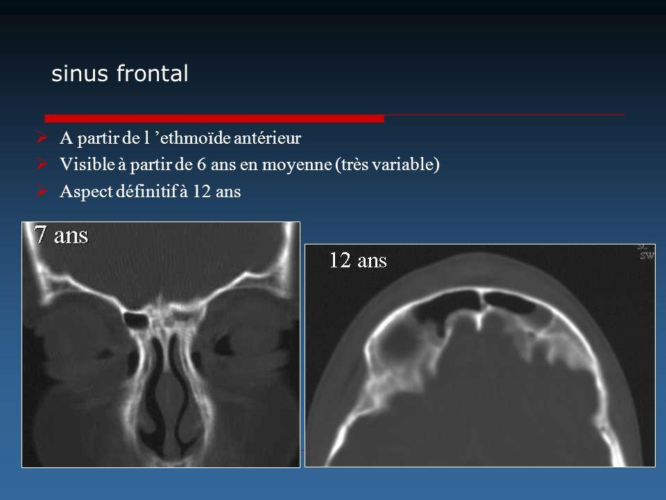 sinus frontal A partir de l 'ethmoïde antérieur