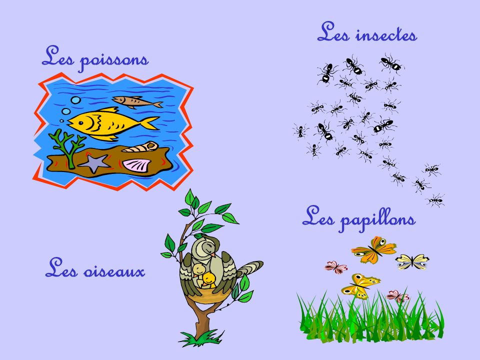 Les insectes Les poissons Les papillons Les oiseaux
