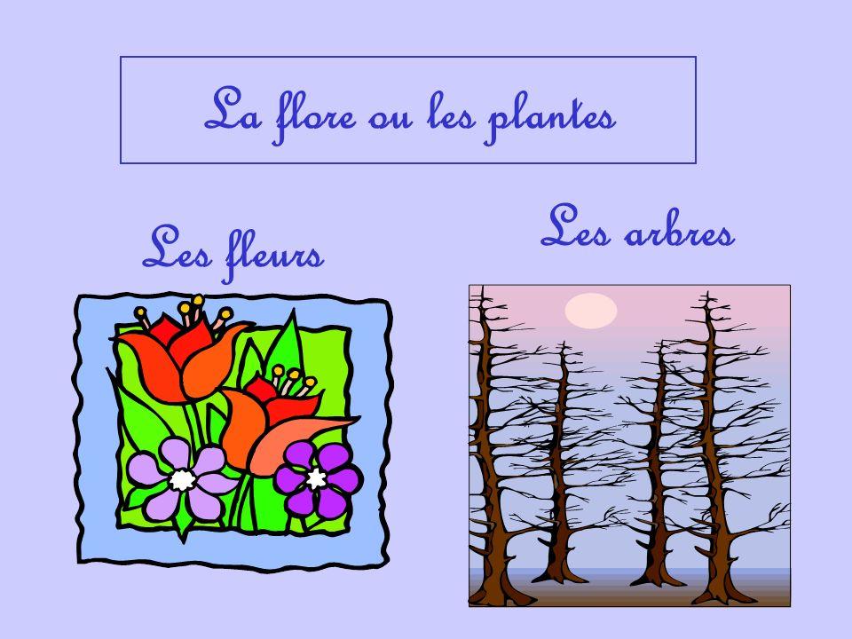 La flore ou les plantes Les arbres Les fleurs