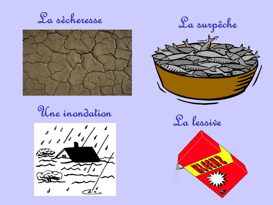 La sècheresse La surpêche Une inondation La lessive