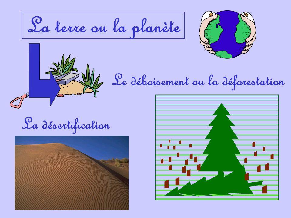 Le déboisement ou la déforestation