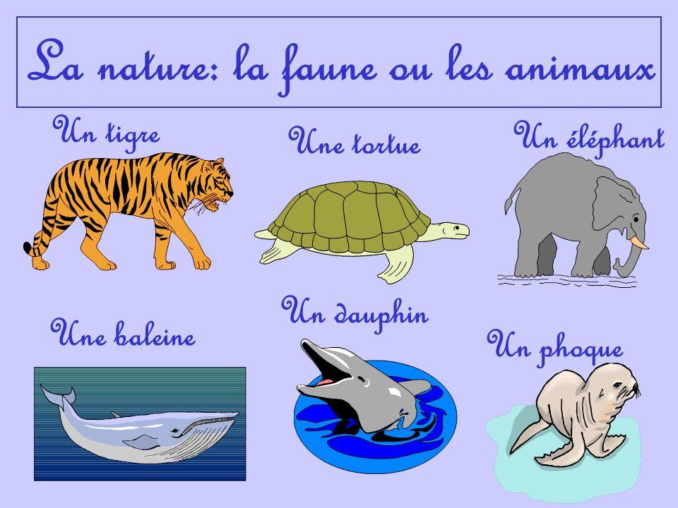 La nature: la faune ou les animaux