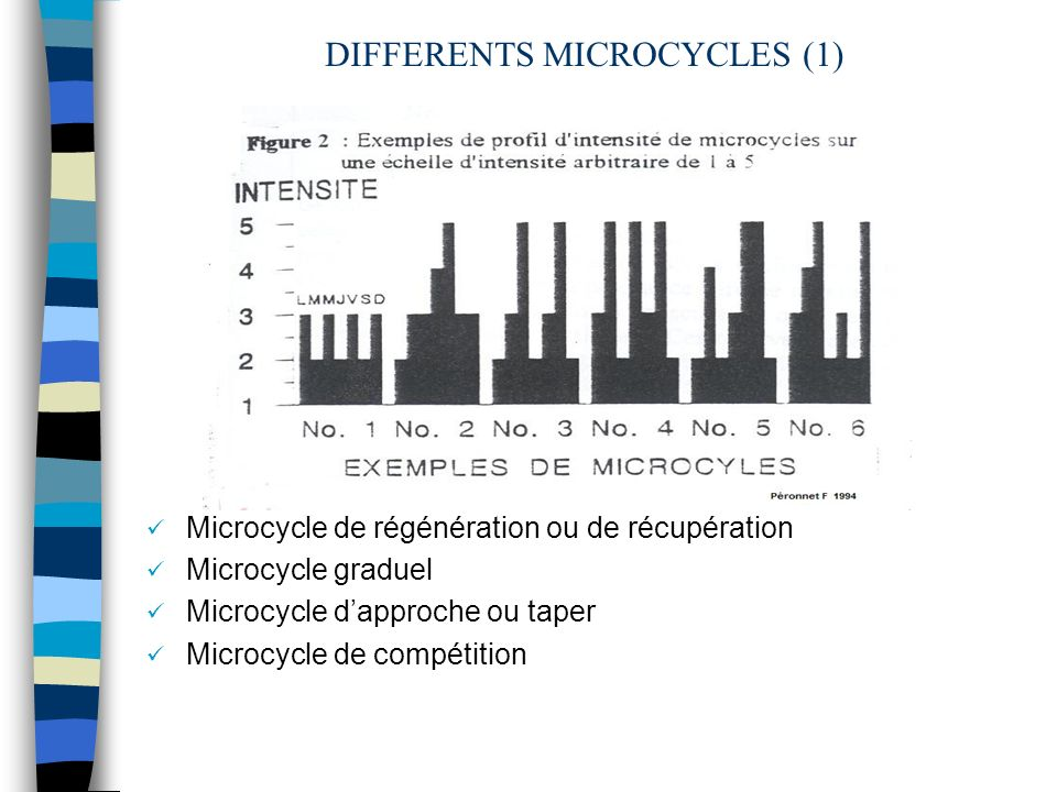 DIFFERENTS MICROCYCLES (1)