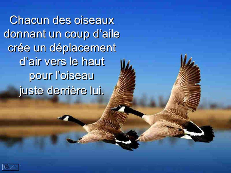 Chacun des oiseaux donnant un coup d'aile crée un déplacement d'air vers le haut pour l'oiseau juste derrière lui.