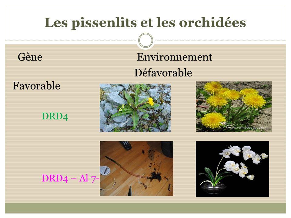 Les pissenlits et les orchidées