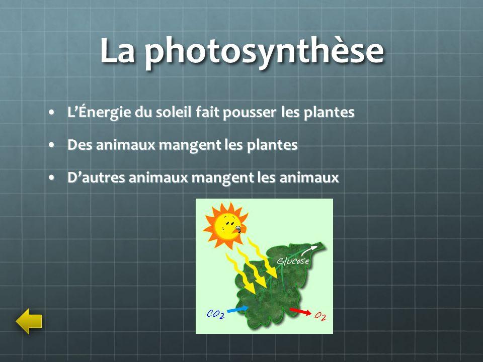 La photosynthèse L'Énergie du soleil fait pousser les plantes