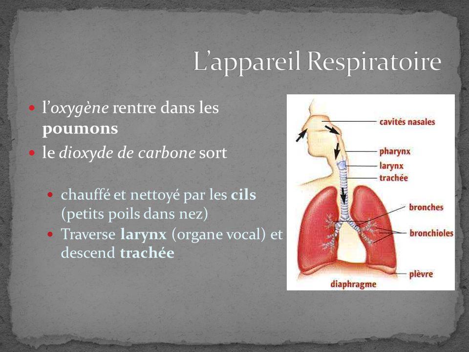 Le syst me cardiovasculaire l appareil respiratoire ppt video online t l charger - Appareil pour couper les poils du nez ...