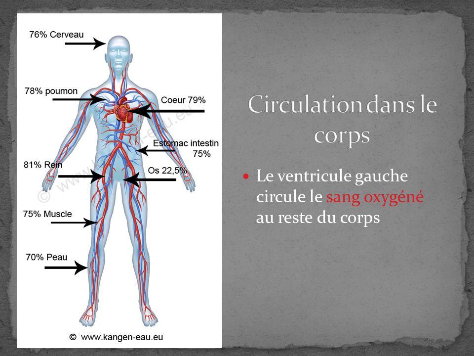 Circulation dans le corps