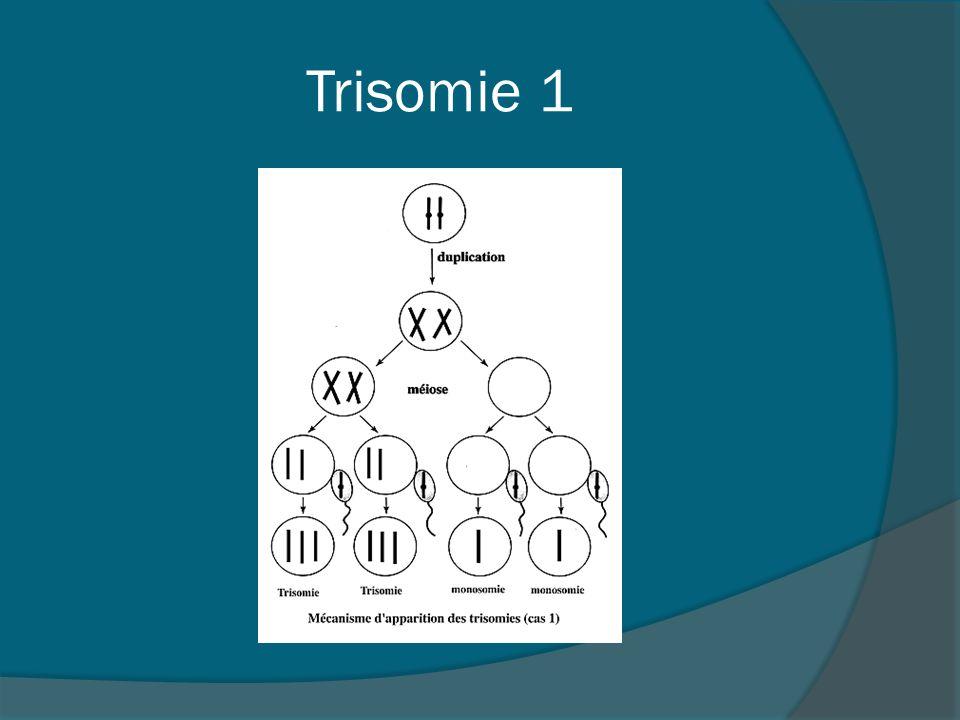Trisomie 1