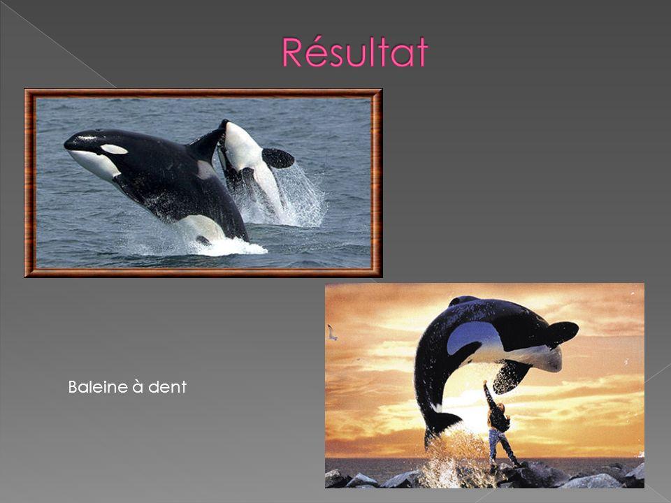 Résultat Baleine à dent
