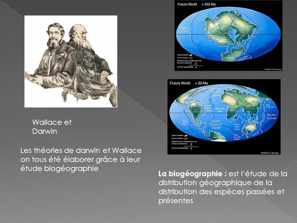 Wallace et Darwin Les théories de darwin et Wallace on tous été élaborer grâce à leur étude biogéographie.