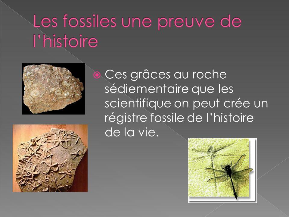 Les fossiles une preuve de l'histoire