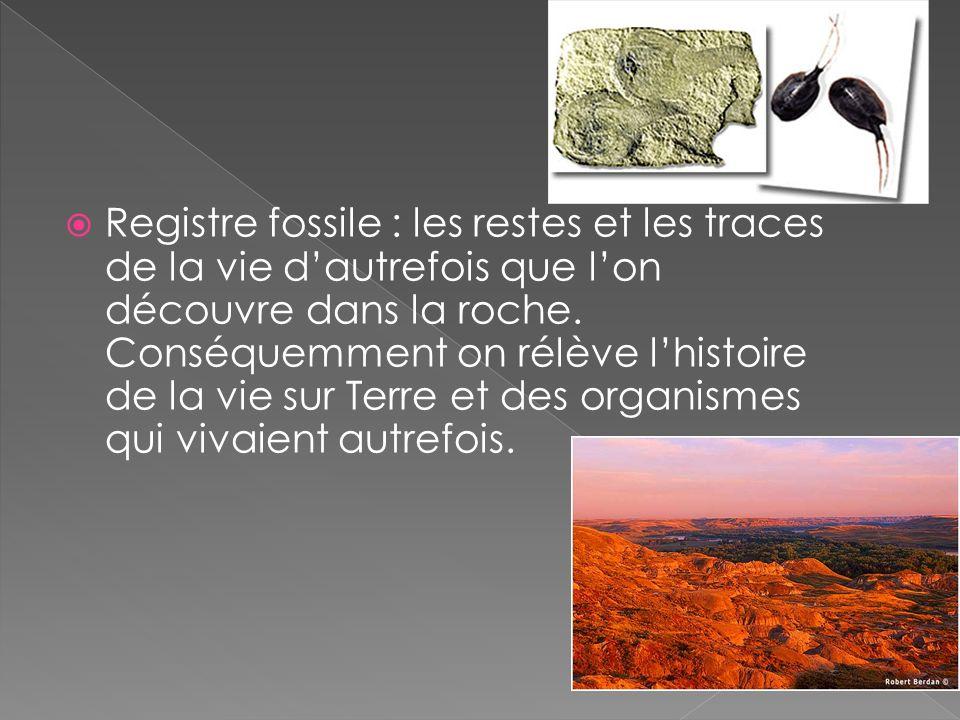 Registre fossile : les restes et les traces de la vie d'autrefois que l'on découvre dans la roche.