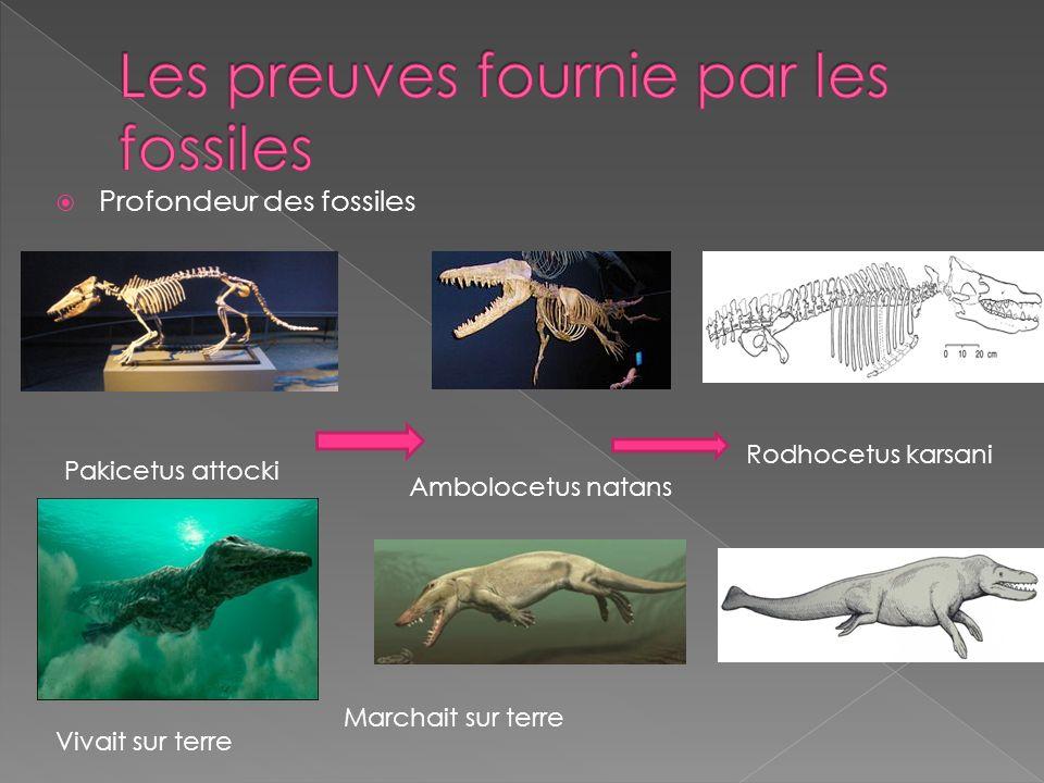 Les preuves fournie par les fossiles