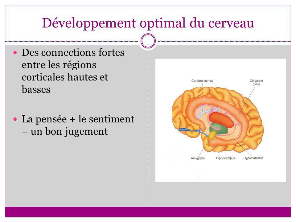 Développement optimal du cerveau