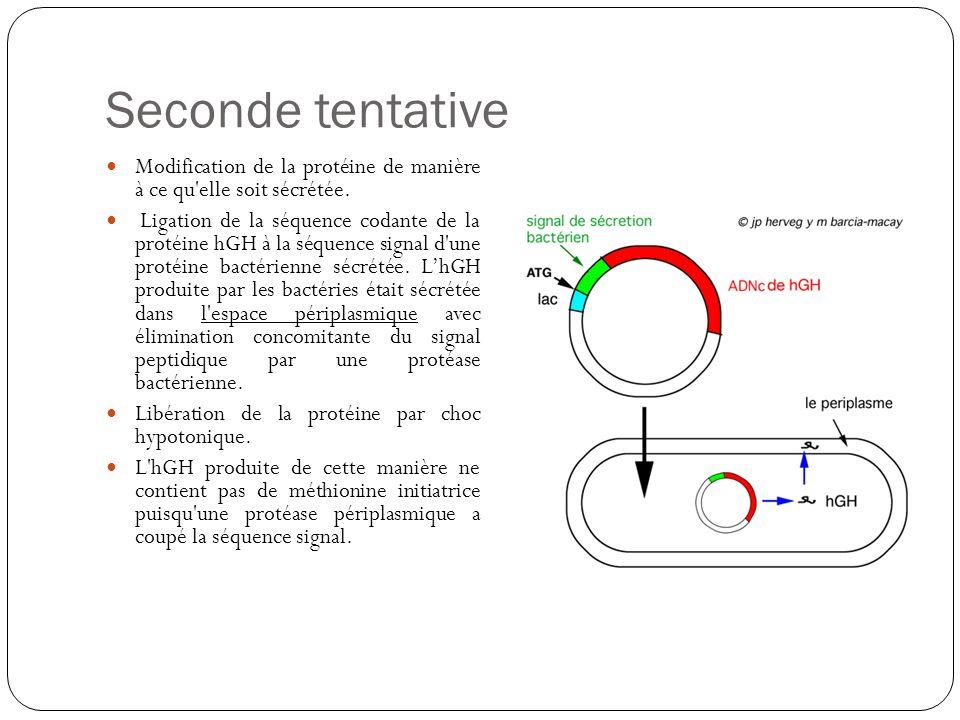 Seconde tentative Modification de la protéine de manière à ce qu elle soit sécrétée.
