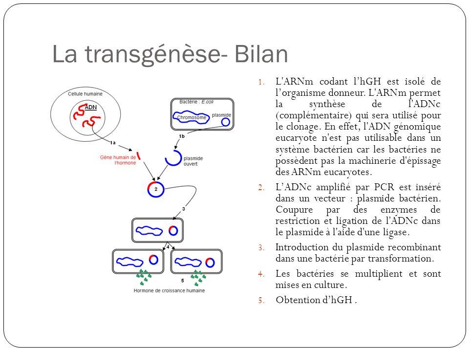 La transgénèse- Bilan
