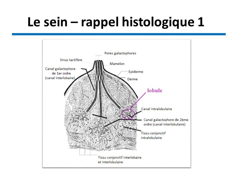 Le sein – rappel histologique 1